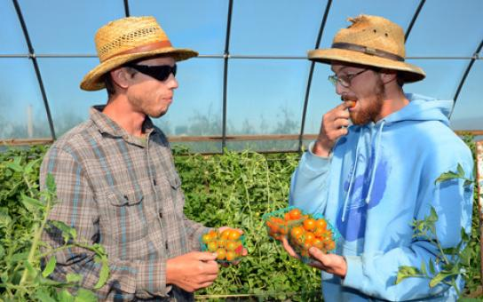 Campus community is invited to purchase ISU horticulture farm produce